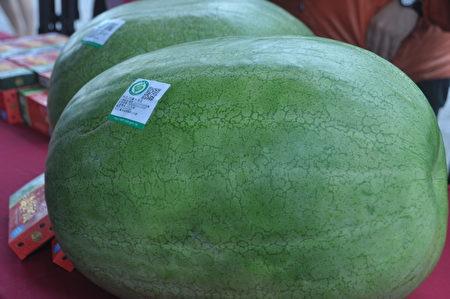 有产销履历认证花莲凤林的大西瓜。