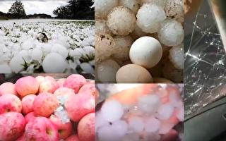 【现场视频】山东重庆降冰雹 有的大如鸡蛋