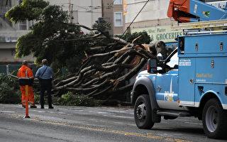 聯邦法官令PG&E 組專門團隊保障輸電線安全