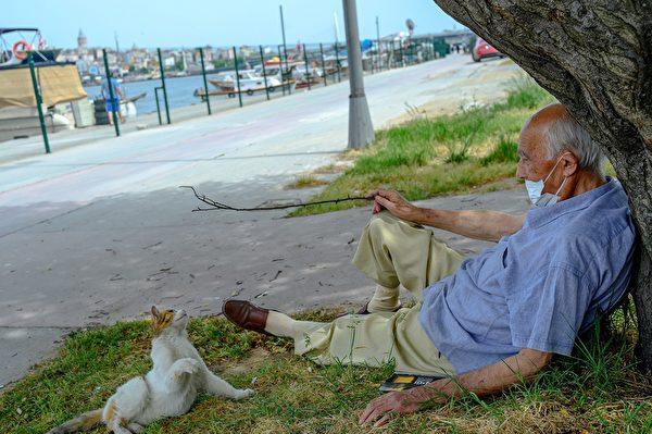 2020年5月17日,土耳其伊斯坦布爾,一名老人坐在樹下,與貓玩耍,為了阻止中共病毒傳播,在這之前一個半月開始實行封鎖。(BULENT KILIC/AFP via Getty Images)
