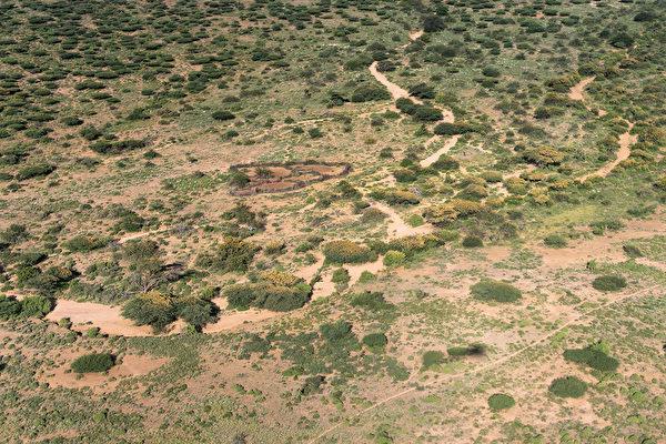2020年5月21日,肯尼亞桑布魯郡,從空中鳥瞰,金合歡樹上有許多蝗蟲。(Fredrik Lerneryd/Getty Images)