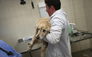 【紐約疫情5.24】露營地開放 獸醫恢復看診