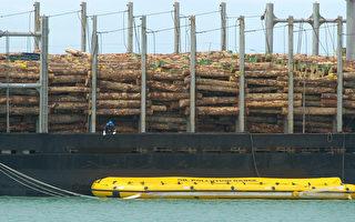 推動「國內木材優先」政策