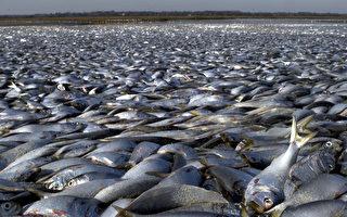 数千条活鱼出现在墨西哥海滩 民众狂捡