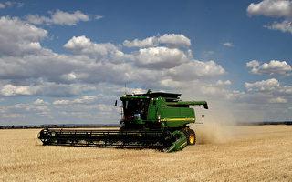 中共对大麦征巨额关税 澳洲或向世贸提申诉