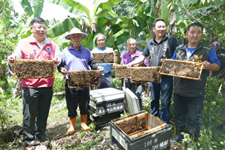 鱼池乡公所及农会、产销班人员准备野放蜜蜂为丝瓜授粉。