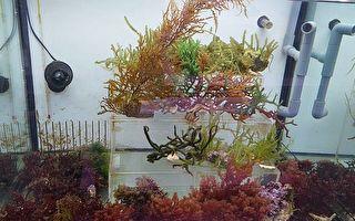 藻类应用研发成果展  海大推出创意料理