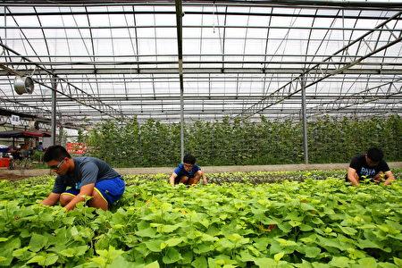 嘉大新民校區自然農法學園溫室。