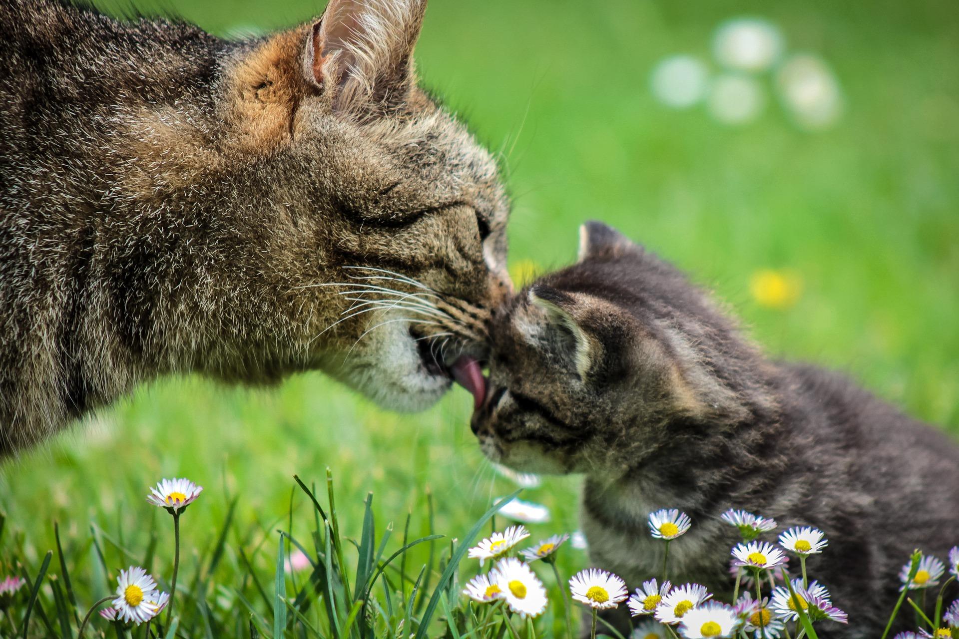 流浪貓媽媽帶小貓上醫院獲得幫助 網友讚爆
