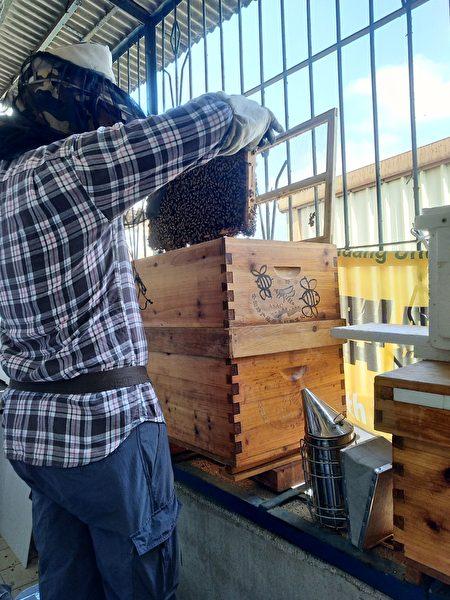窗臺養蜂。