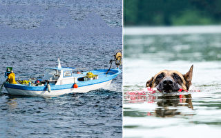 幸好帶狗狗出海!翻船後忠犬游11小時找人救援