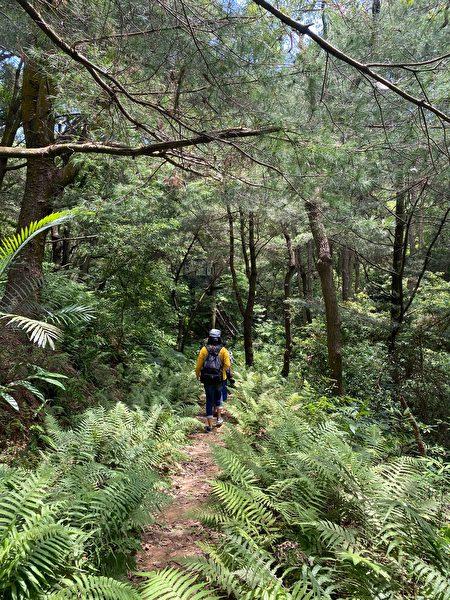 森大的淺山環境,只有一條被山林圍繞的單人小徑。