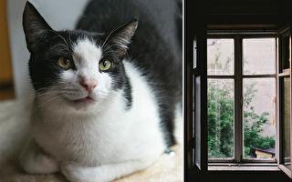 收編自來貓 倫敦封城有貓陪 他在家工作不無聊