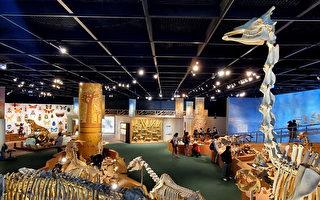 敘說大自然故事 科博館「繽紛生命」特展