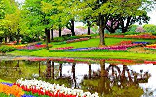 世界最美丽的郁金香花园 空无一人的奇景