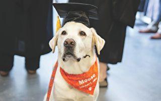 帮助无数学生 美国治疗犬获颁荣誉博士学位