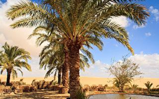 埃及绿洲的盐池清澈见底 人人都可浮在水面