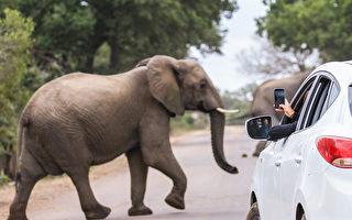 本週六開始 可驅車遊覽多倫多動物園