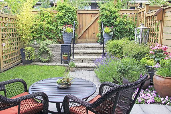 庭院种植蔬菜