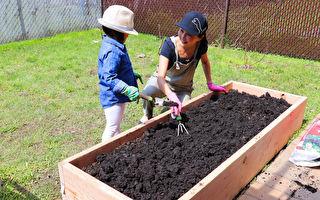 【美食天堂】在家打造小菜园 乐活栽种不是梦
