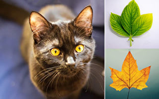 主人拒绝礼物 玳瑁猫困惑了数月后改送叶子