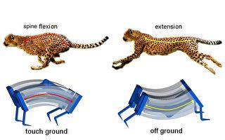 新研究仿生獵豹製造最快機器人