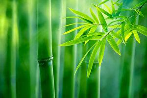 被高人用一片竹叶送还乡 书生了悟入山求道