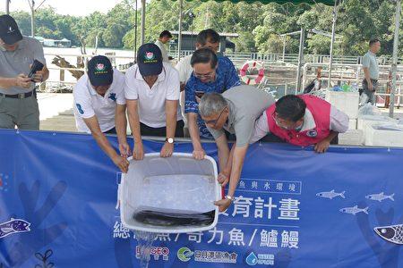 揭牌儀式的重頭戲是放流生長了20年,重達22斤半的臺灣原生大鱸鰻。