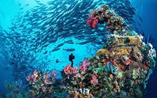 2020菲律賓線上潛水展  感受菲律賓繽紛水下世界