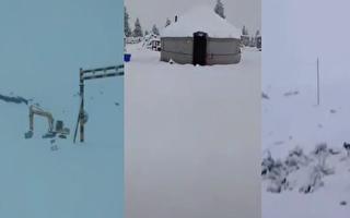 网传视频:新疆伊犁等多地6月飞雪