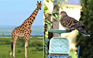 世界最古老动物园每年都要为动物做的一件事
