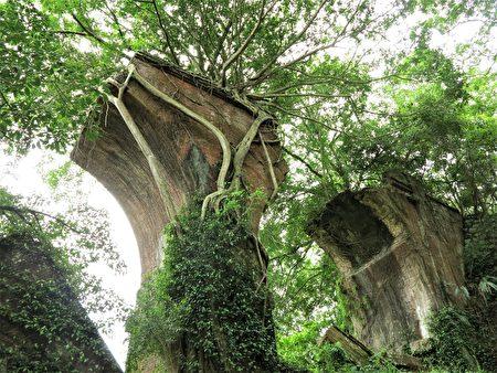 被称为南段桥的龙腾桥墩隐密在绿树丛林中。