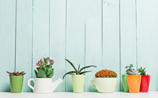 選擇盆栽 你的星座適合什麼室內植物?(下)