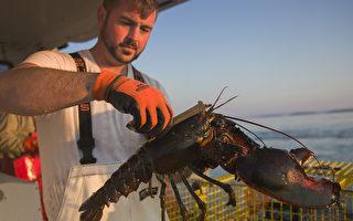 保护龙虾产业 川普或对中国商品加新税