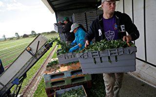 英政府號召民眾支持本國食品行業