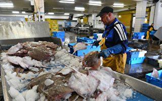 組圖:疫情下法國吉爾維內克港的漁業