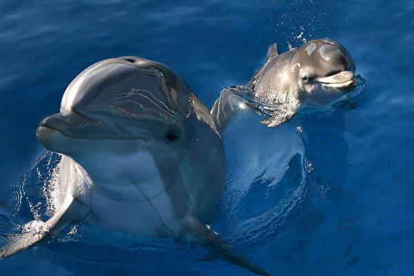 飓风洪水影响海洋 海豚患皮肤病