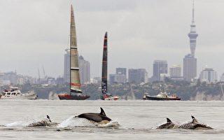 政府發布新捕魚措施保護Hector's和Māui海豚