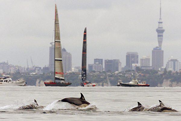 政府发布新捕鱼措施保护Hector's和Māui海豚