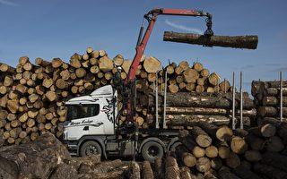 原木出口凸顯貿易不公 行業限制可否解決?