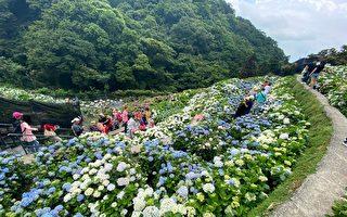 花都开好了!响应阿中部长  国旅就到竹子湖