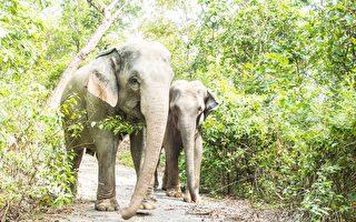 印度男子预留遗产 6英亩土地捐给两只大象