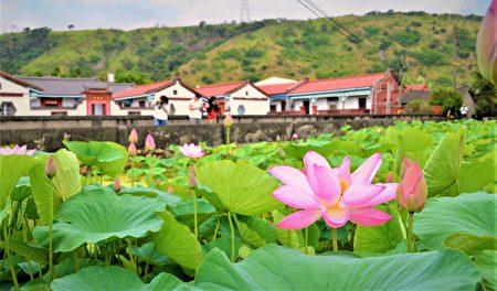 台中海线的清水赵家古厝,也是许多赏花客推荐的景点,除了有百年历史的古迹建筑外,搭配建物前方的一池粉色荷花,古色古香的风景值得一访。