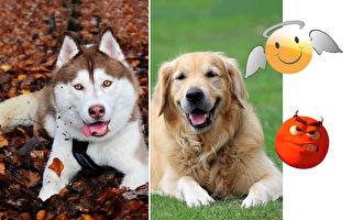 狗狗能分辨出好人和壞人 只吃好人給的食物