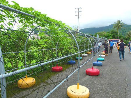 成功镇农会栽培的木虌果生长环境体验步道。