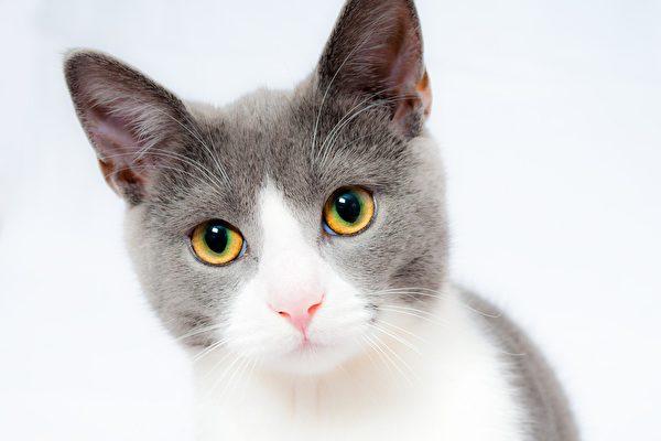 美國小貓喜歡攀岩 像壁虎般爬牆壁