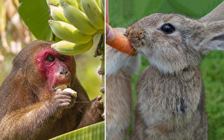 兔子吃紅蘿蔔、猴子吃香蕉?專家:不對!