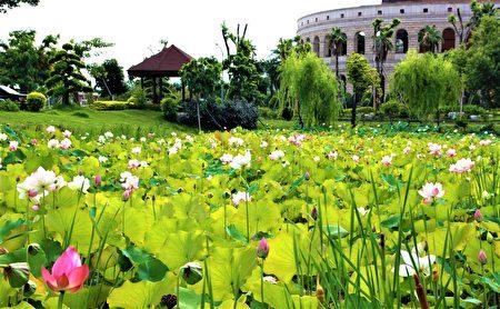 霧峰區的亞洲大學,每年到了5、6月份,校園內的鳳凰花、阿勃勒和荷花陸續綻放,一次可以欣賞到多種花卉。