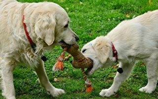 """小狗在公园对同伴""""说谎"""" 被主人发现"""