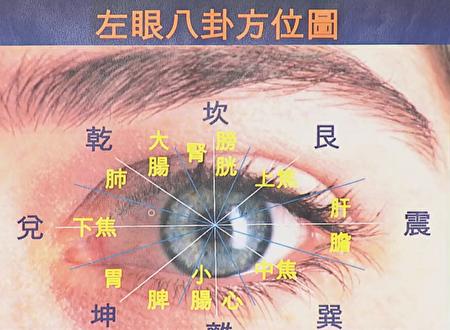 我們的眼睛與五臟六腑有連帶關係。(摘自新唐人電視台「談古論今話中醫」)